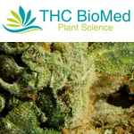 THC Biomed International Ltd.