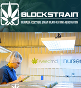 Blockstrain Technology Corp.