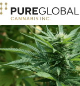 Pure Global Cannabis Inc.